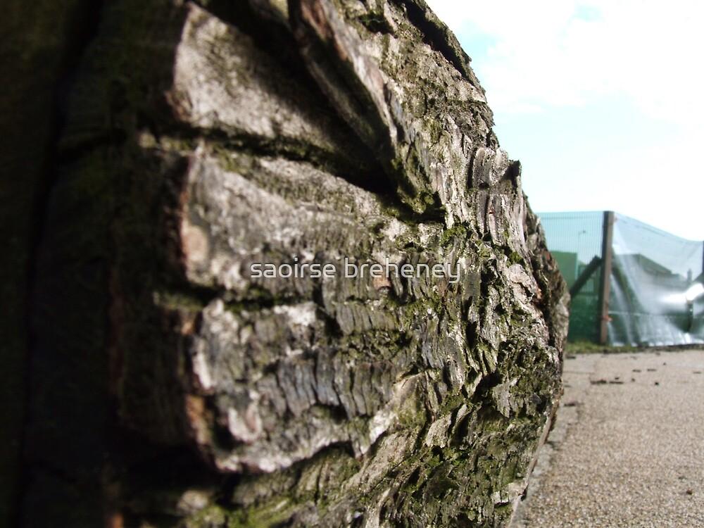 The log. by saoirse breheney