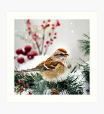 Winter Bird Sparrow Square Art Print