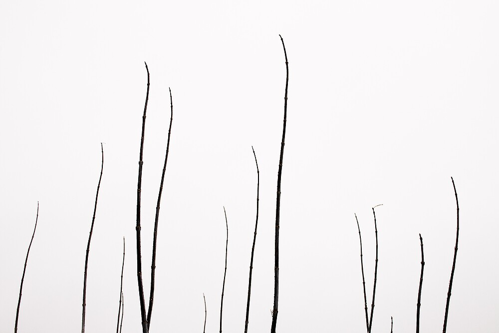 Minimal Nature II by Ulf Buschmann