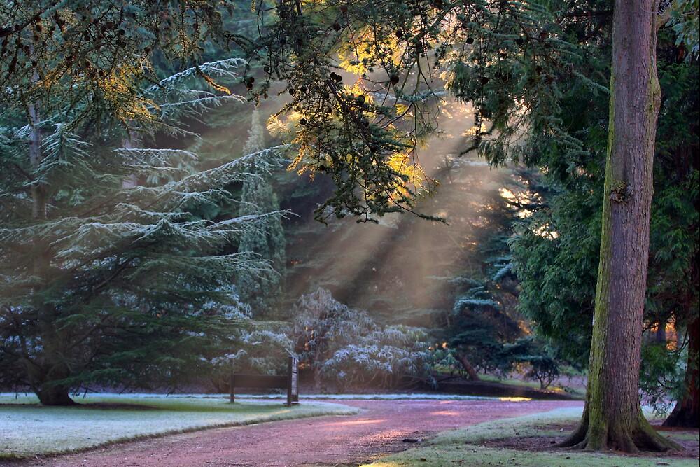 Winter Wonderland by Scott Liddell