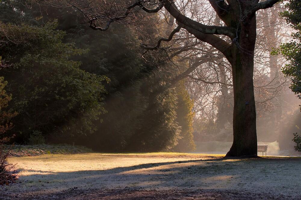 Magical Light by Scott Liddell