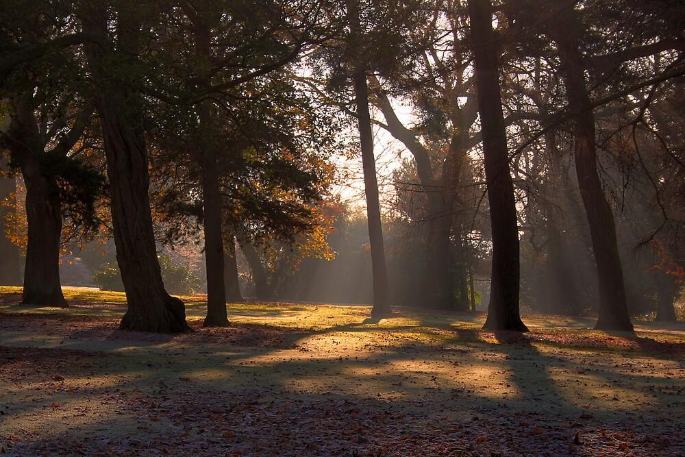 Sunlight by Scott Liddell