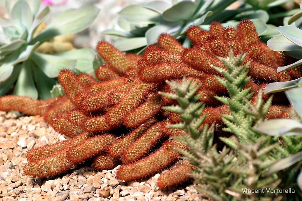 Creeping Cacti by Vincent Vartorella