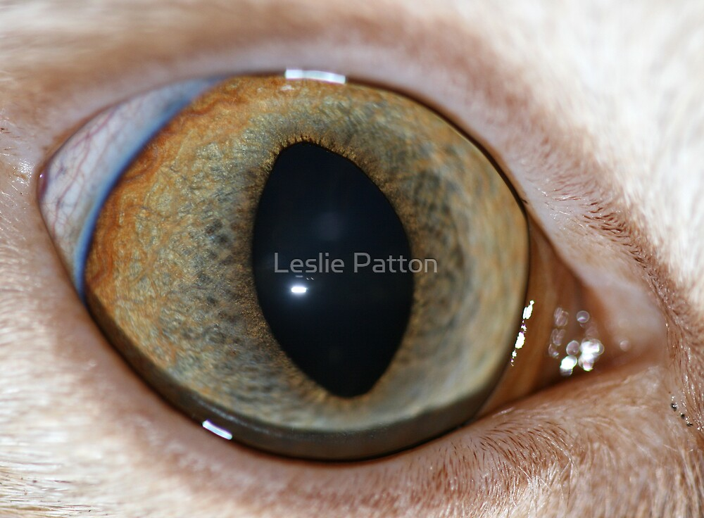 Cats Eye by Leslie Patton