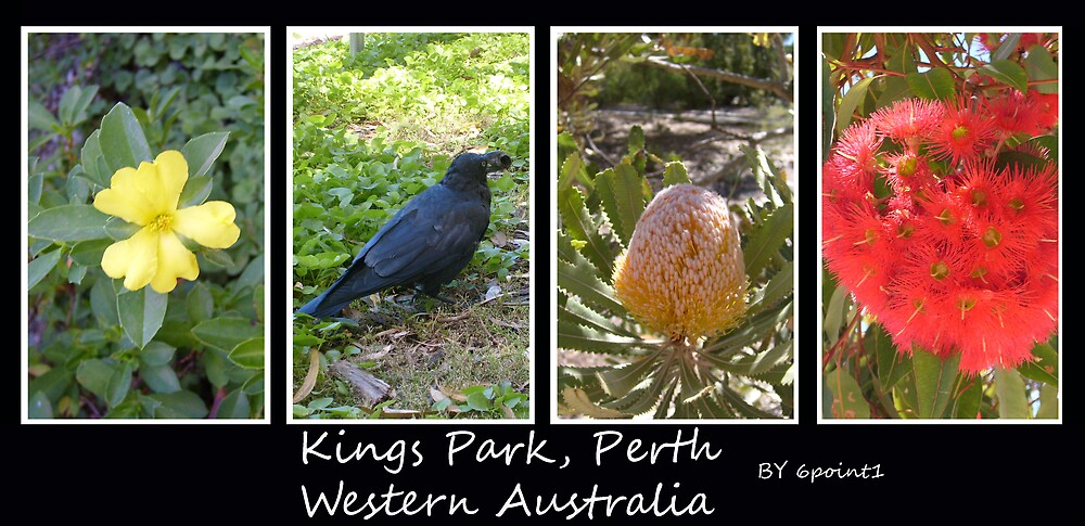 Kings Park Western Australia by Daniel Rayfield