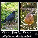Kings Park Western Australia by Daniel Rayfield