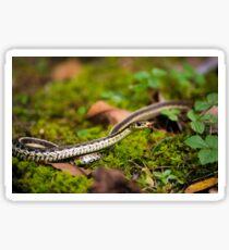 Slithering Snake Sticker
