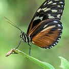 Butterfly on a leaf  by David Patterson