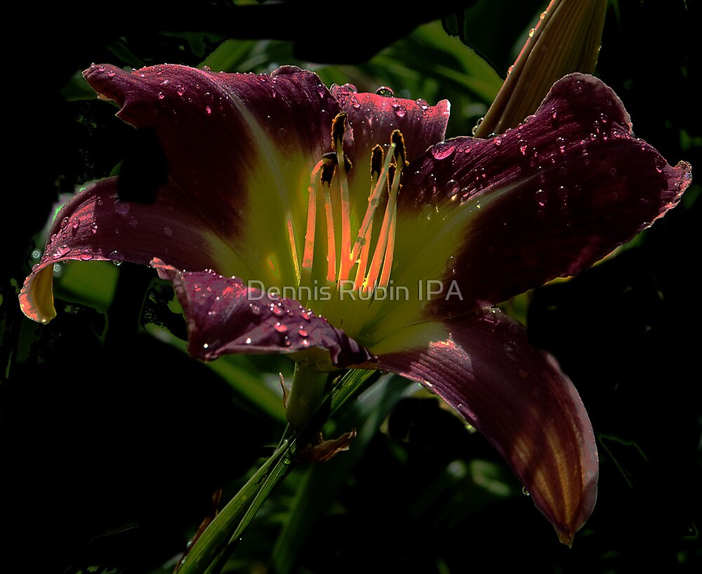 Day Lilly  - Stamen on Fire by Dennis Rubin IPA