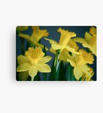 Dreamy Daffodils Canvas Print