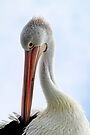 Pelican Portrait by Evita