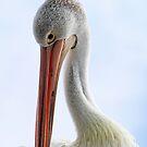 Pelikan-Porträt von Evita