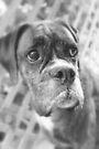 Es ist nicht fair - Boxer Dogs Series von Evita