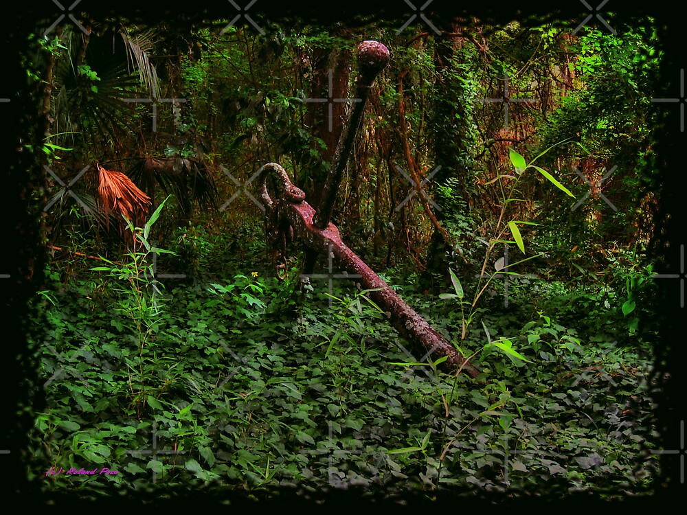 Anchor in the Woods by photorolandi