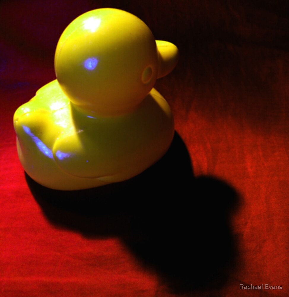 Lone Duck by Rachael Evans