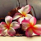 Painted Pink Frangipani & Samen Pods von Evita