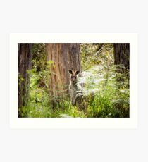 Kangaroo in the bush, the Grampians, Victoria Art Print