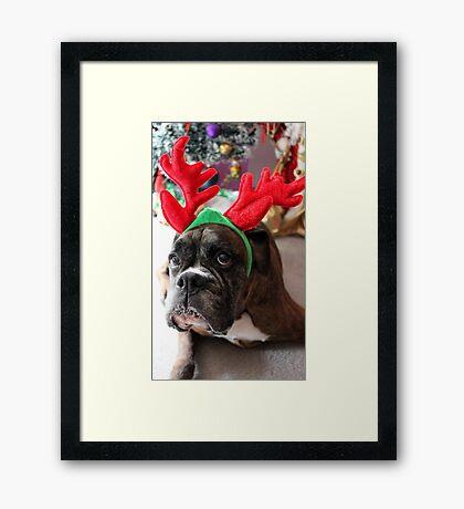 Rentier dieses Jahr? ...... Alles für dieses Plätzchen! - Boxer-Hunde-Reihe Gerahmter Kunstdruck