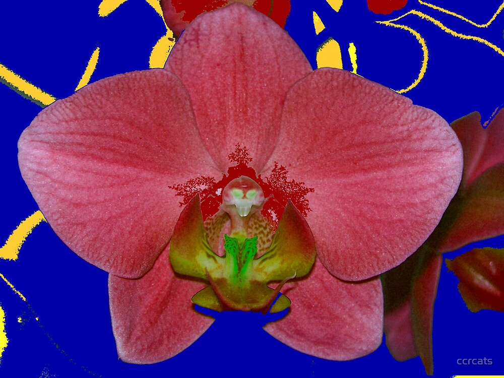 The orchid.  by ccrcats