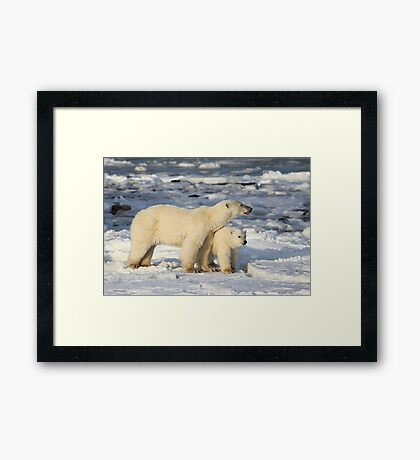 Standing Guard Over Her Cub, Churchill, Canada  Framed Print