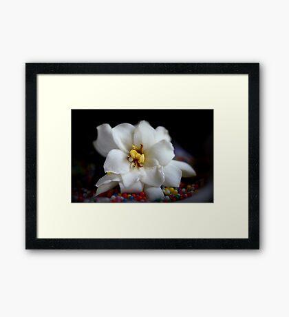 Jasmin - Still Life Framed Print