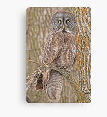 Camouflage-an owl's best friend Canvas Print