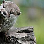 Otter Dreams by Ladymoose