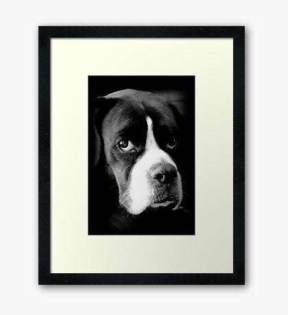 Arwen - Weiblicher Boxer-Hund - Boxer-Hunde-Reihe Gerahmter Kunstdruck