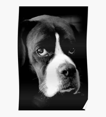 Arwen - Weiblicher Boxer-Hund - Boxer-Hunde-Reihe Poster