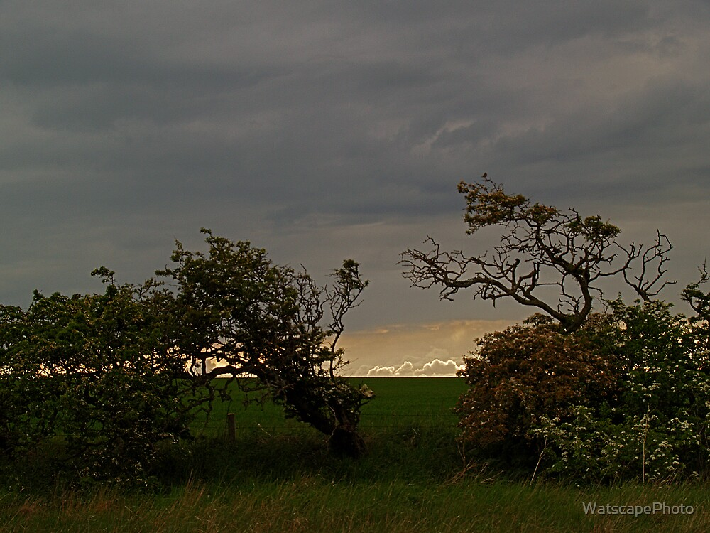 Evening Hedgerow by WatscapePhoto