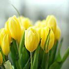 Buttery Yellow Tulips - Earth Day by Yannik Hay