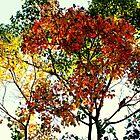 An Autumn Sonata by Evita
