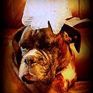 Boxer-Hund mit Bogen - Boxer-Hunde-Serie von Evita