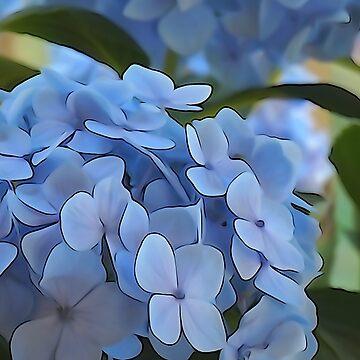 Periwinkle Hydrangea by KCavender