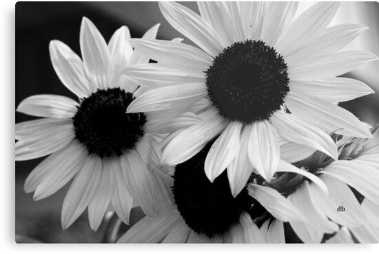 sunflowers by daniels