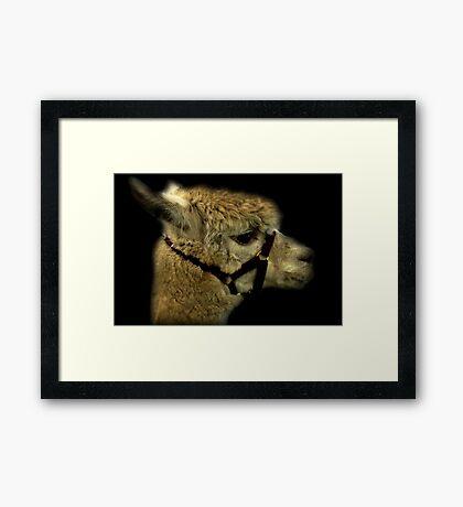 Profil - Alpaka Gerahmter Kunstdruck