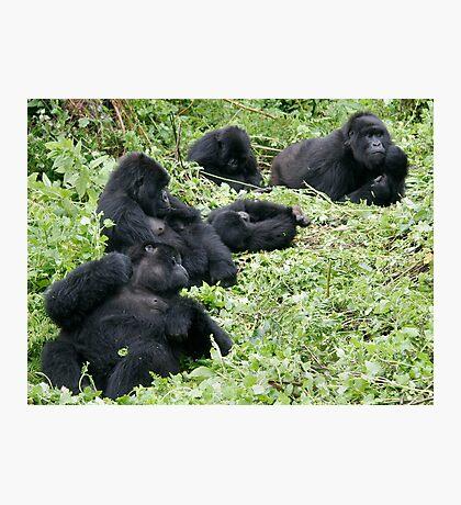 Mountain Gorillas Photographic Print