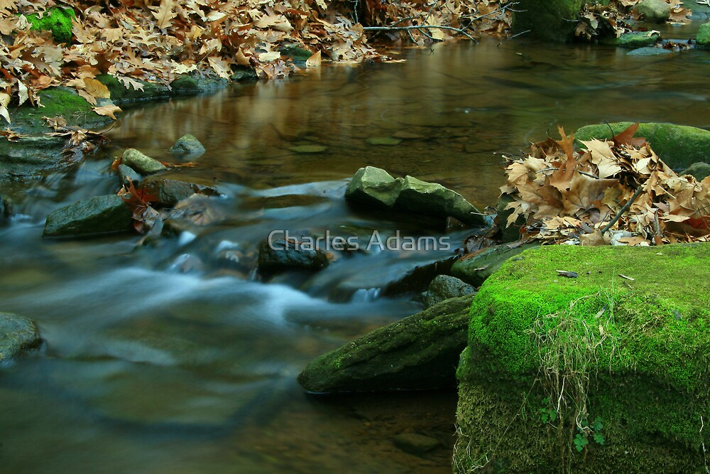 Stream 1 by Charles Adams