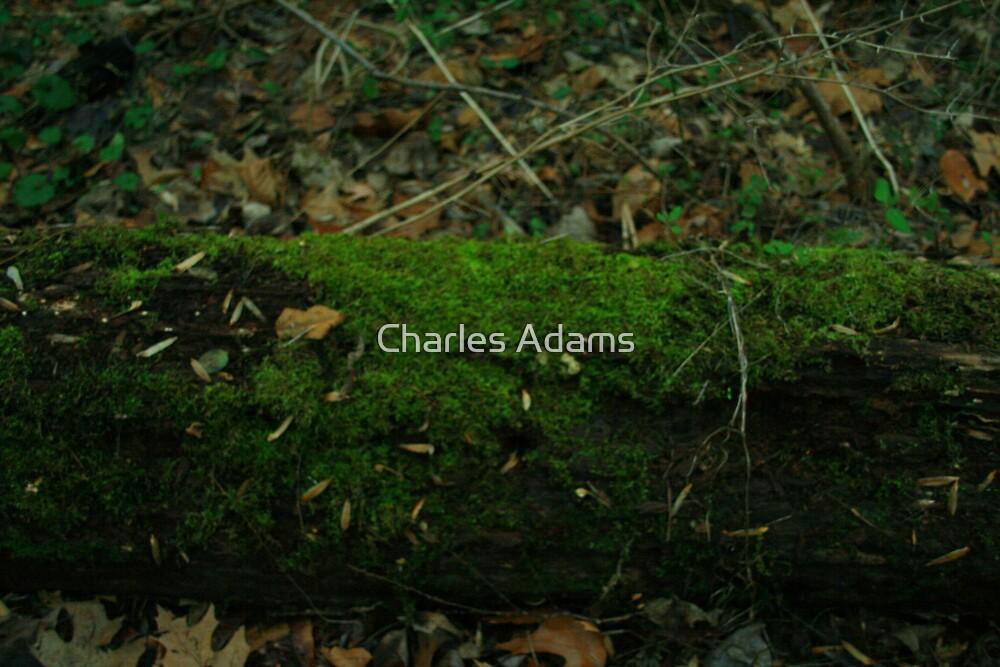 Mossy Step by Charles Adams