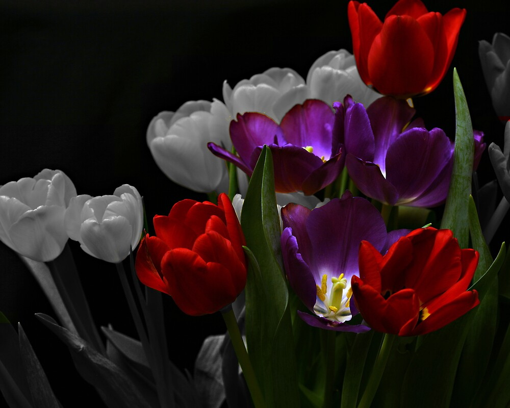 Tulips Selective Coloring by Swede