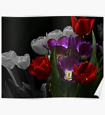 Tulips Selective Coloring Poster