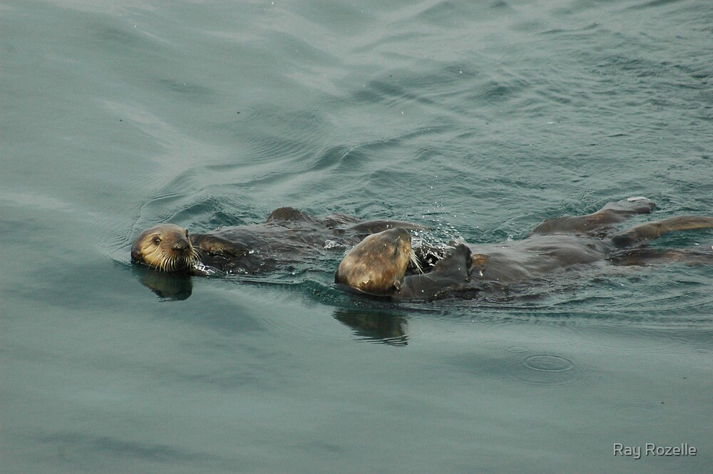 Otters by Ray Rozelle