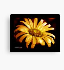 PAINTED DAISY Canvas Print