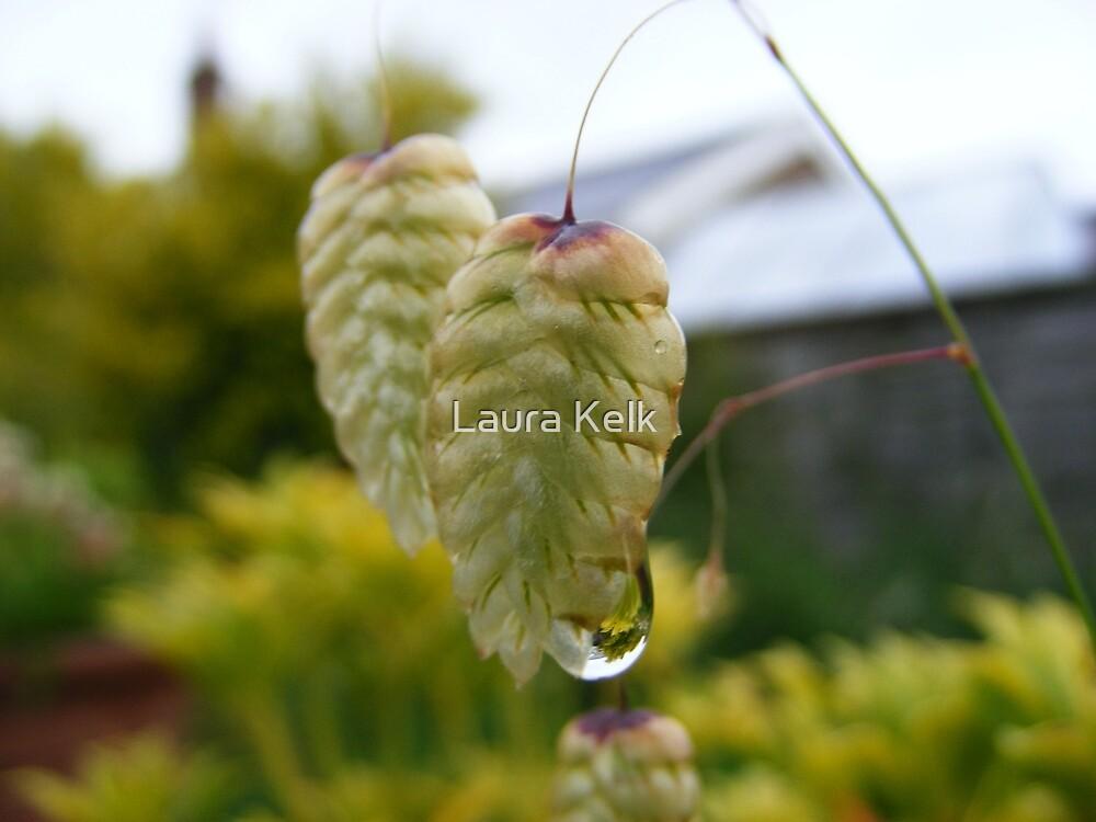 Damp Seed by Laura Kelk