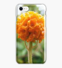 Buddleja globosa iPhone Case/Skin