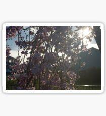 Radiant Blossoms Sticker