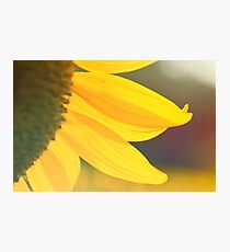 Sunflower 5 Photographic Print