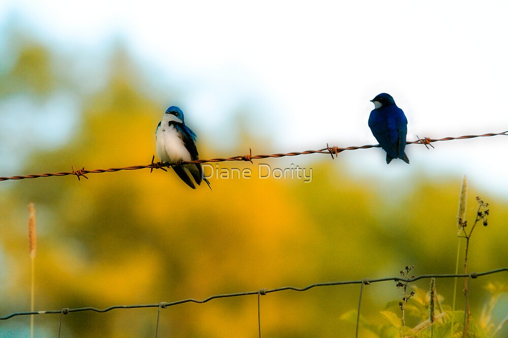 Bluebirds by Diane Dority
