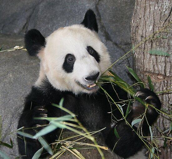 The Happy Panda by Lisa G. Putman