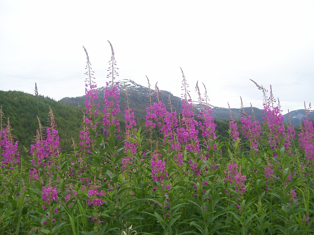Fireweed in bloom by tigger24adt